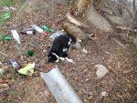 В Ленино массово травят животных (фото 18+)