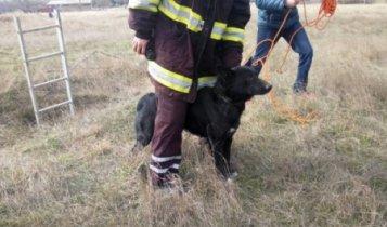 Керченские спасатели помогли спаси собаку из шестиметровой ямы.м
